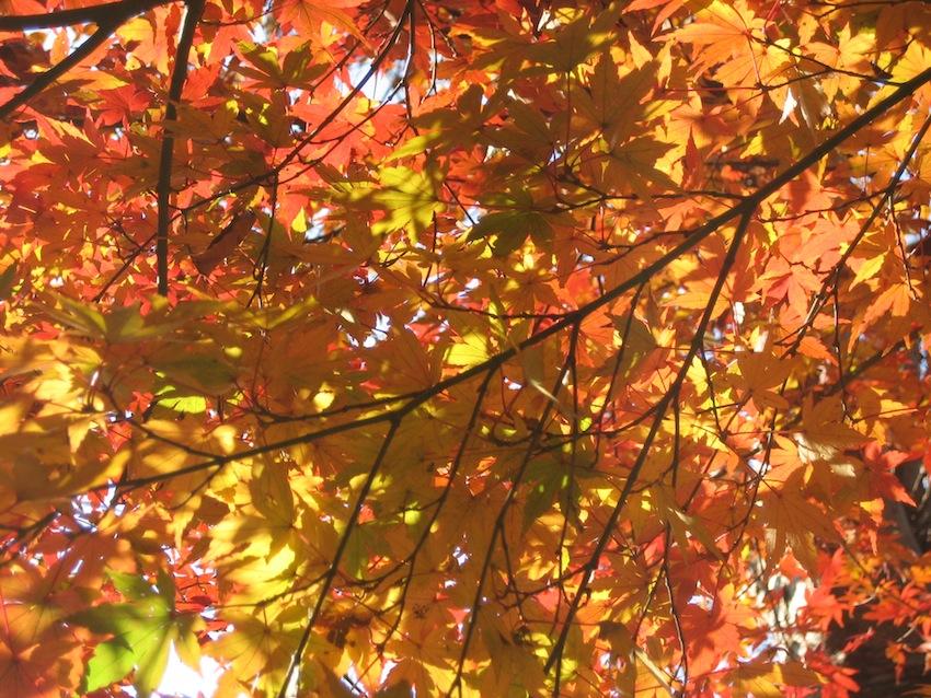 浅間山の秋1