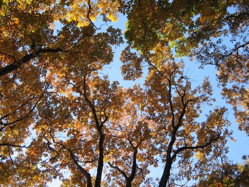 浅間山の秋10