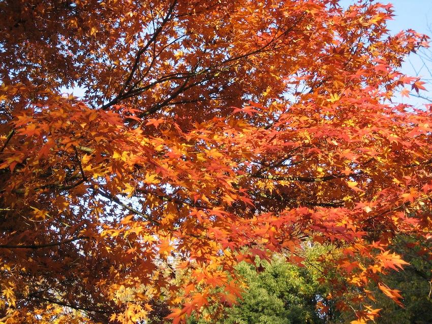 浅間山の秋14