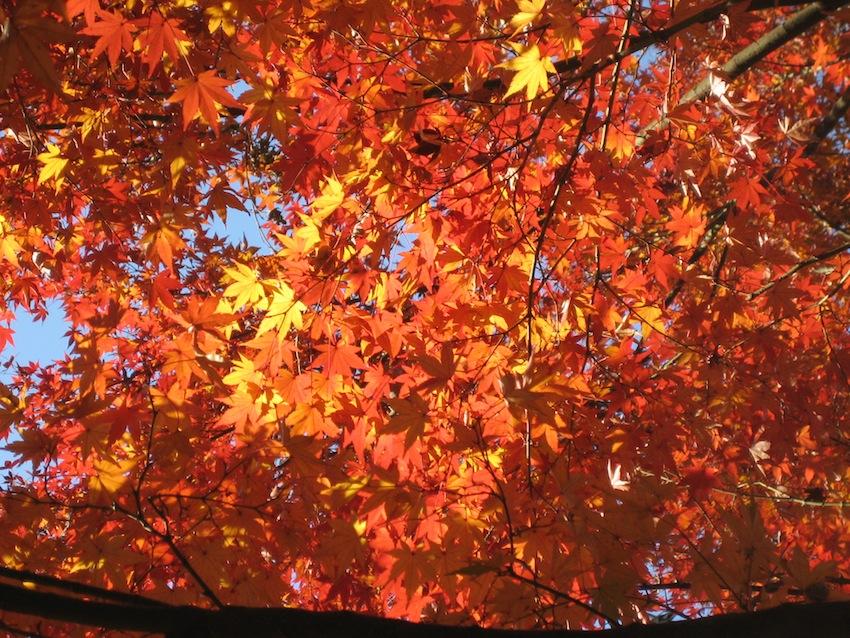 浅間山の秋2